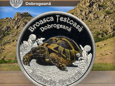 Broasca Țestoasă Dobrogeană