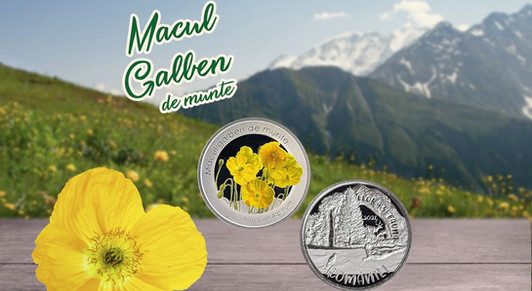 MACUL GALBEN DE MUNTE