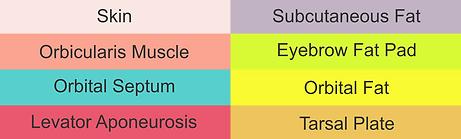 Eyelid Anatomy - Legend.png