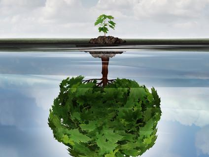 Que sera la Réussite est dans le pré dans cinq ans : notre vision