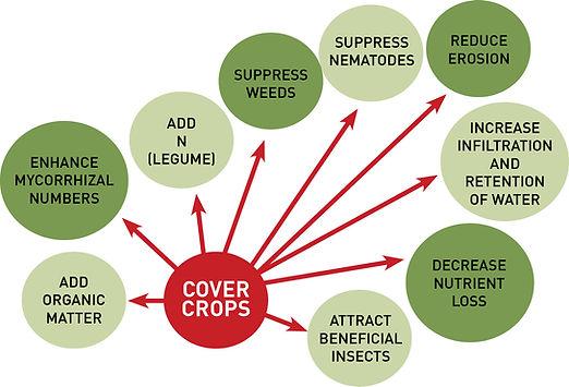 Cover_crops_graph.jpg