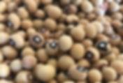 Jugo beans 1.jpg