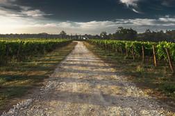 Allée de Vigne Saint Emilion