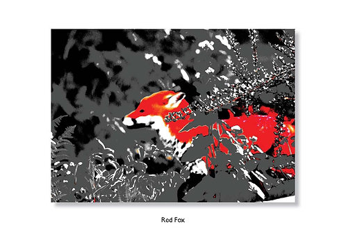 Red Fox, Greeting card.