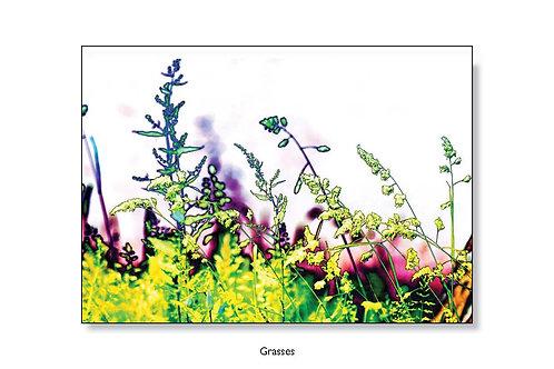 Grasses Greeting Card.