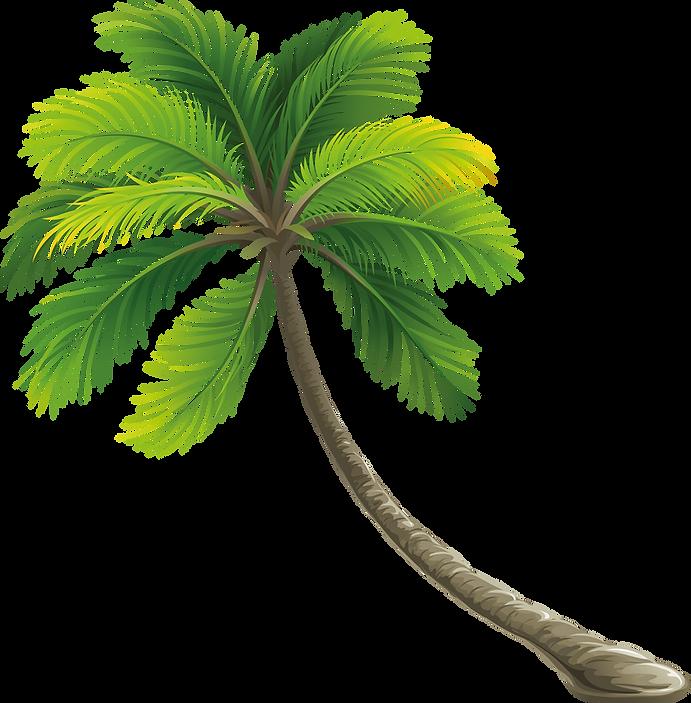 palmera.png