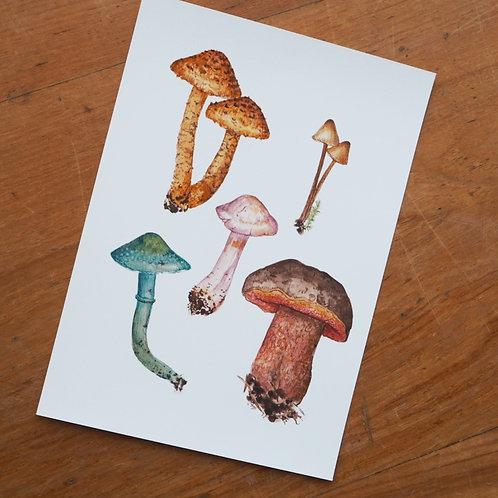 Autumnal Mushroom Illustration A5