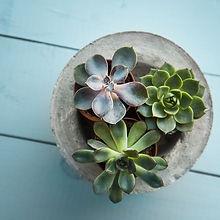 succulent close up .jpg