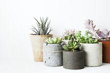 succulents 2.jpg
