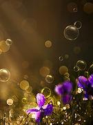 purple%20bubbles_edited.jpg