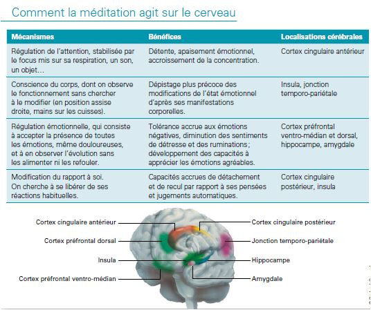 Action de la méditation de pleine conscience sur le cerveau
