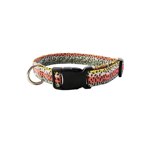Rainbow Trout - Dog Collar