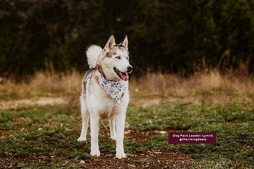 Bohemian Blossom - Matching Dog Collar and Dog Over the Collar Bandana Set