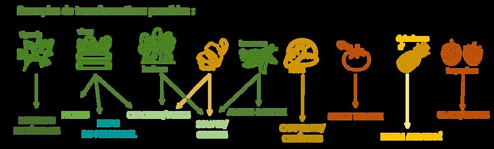 Exemples de transformations possibles des pertes et parures des aliments