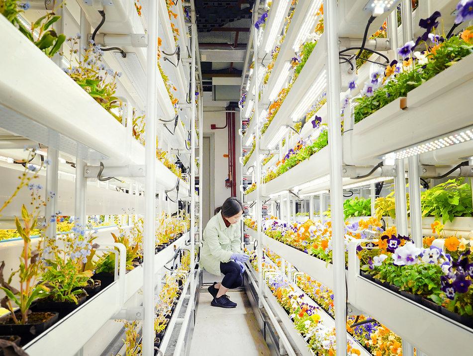 Technology 2_Indoor Farming.JPG