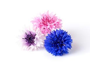 Edible Flowers_ Cornflower_Group.jpg