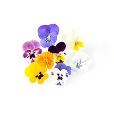 Edible Flowers_ Mixed Colour Violas.jpg