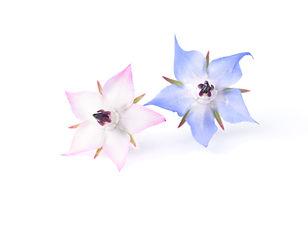 Edible Flowers_ Borage.jpg