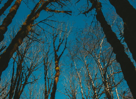 An Ode to the Canopies of the Trees | A Photographic Essay