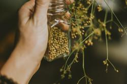 Ritual of Harvest