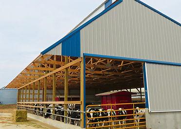 ag-heifer-shed-3 - top notch.jpg