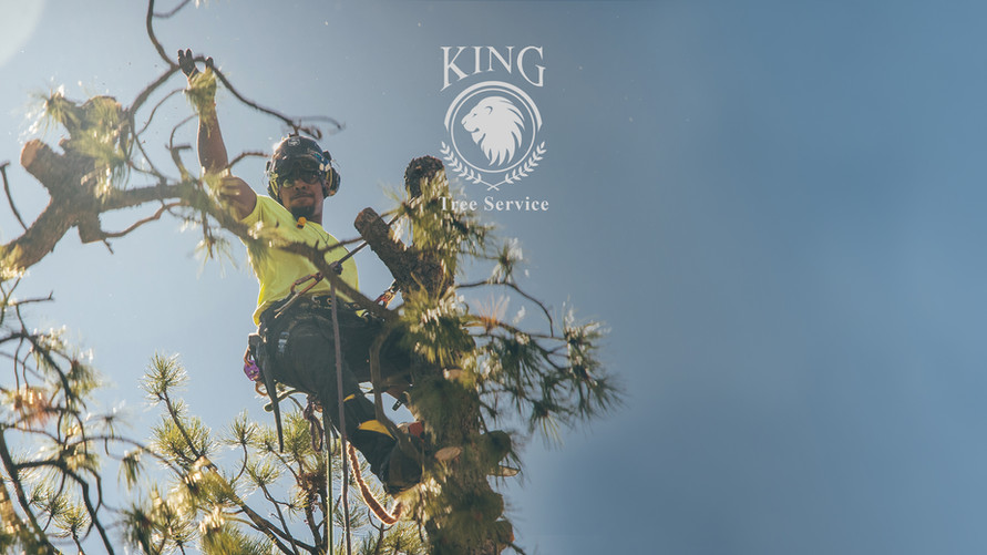 KING TREE SERVICES
