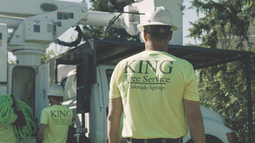 King Tree Services - Framegrab