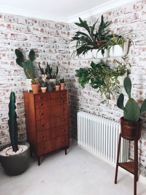 House plant decor