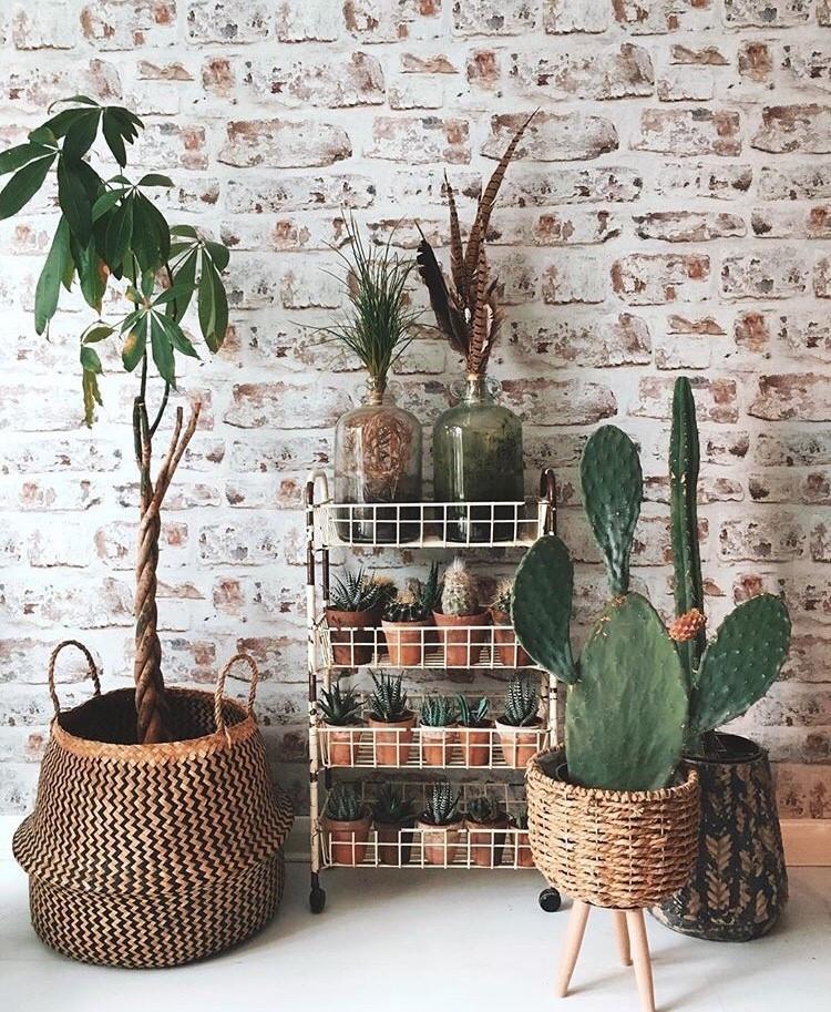 boho botanical home