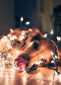 christmasdog2.jpg
