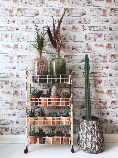 House plant styling
