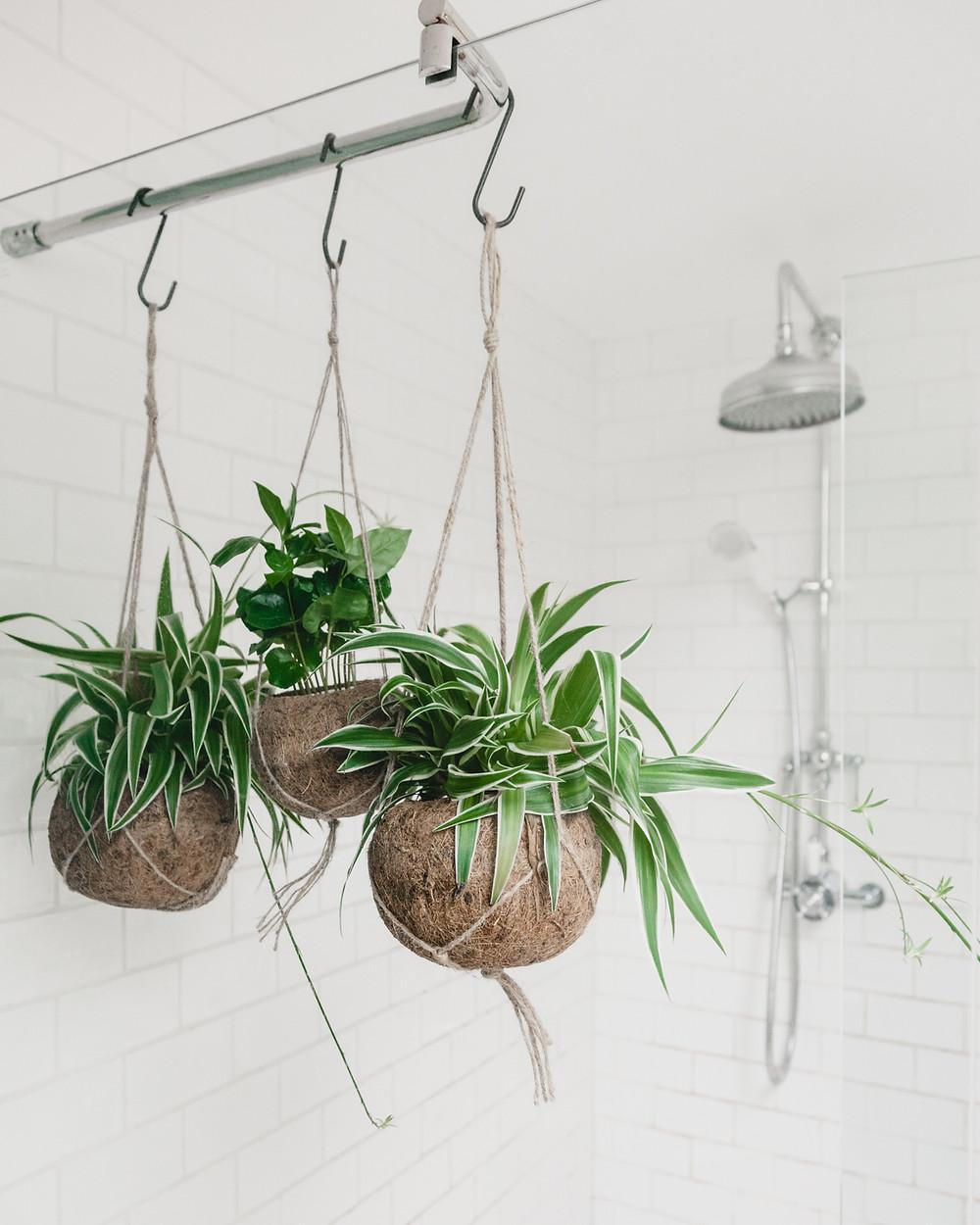 Kokedama planters