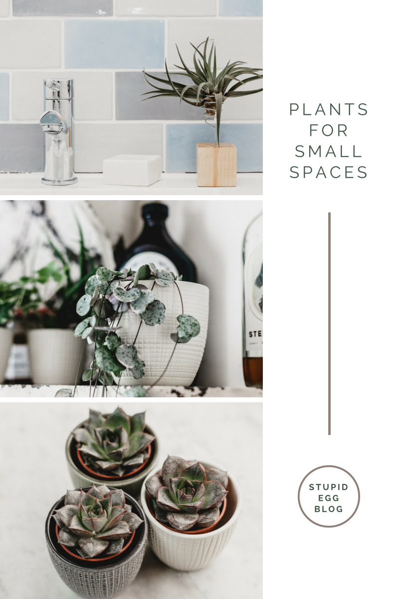 House Plants for small spaces