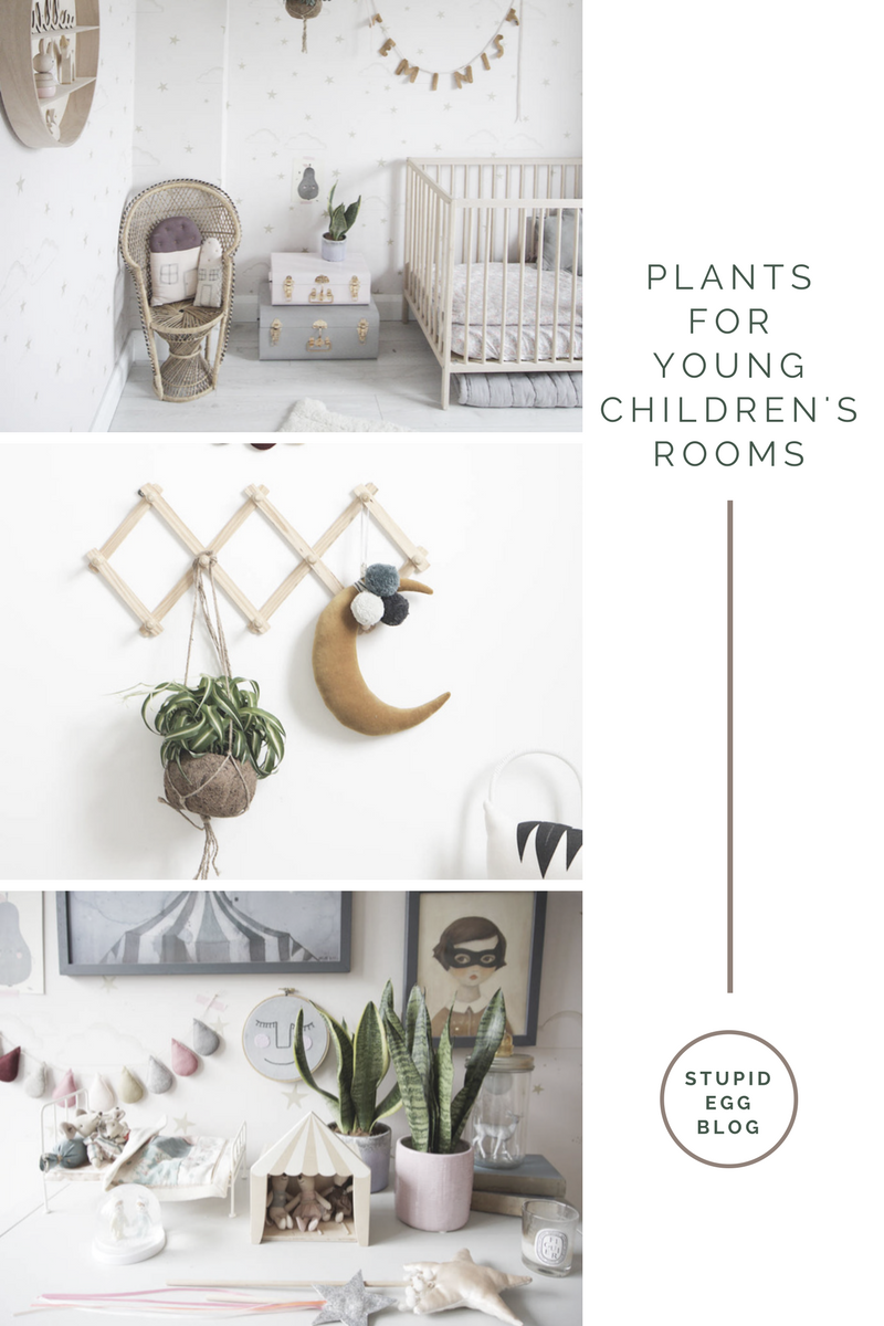 Plants for young children's rooms