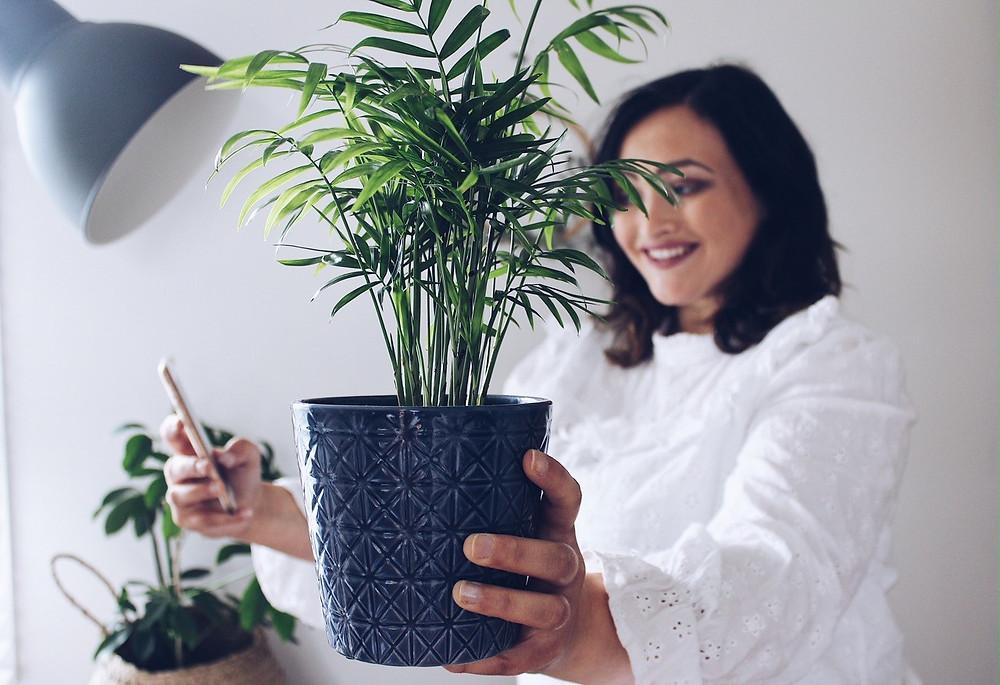 House plant pot