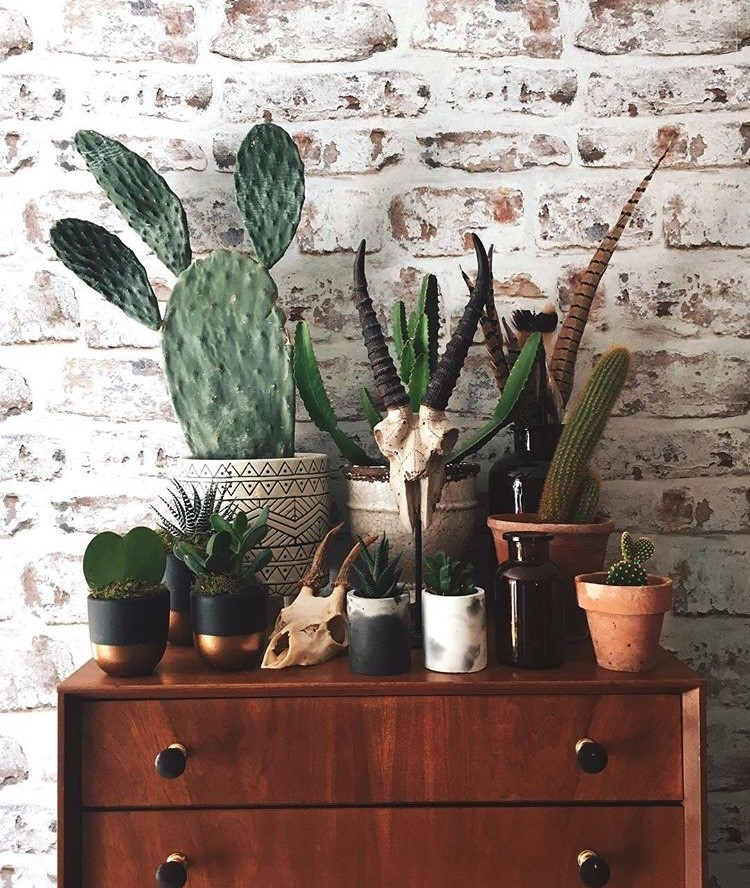 cactus plants in home