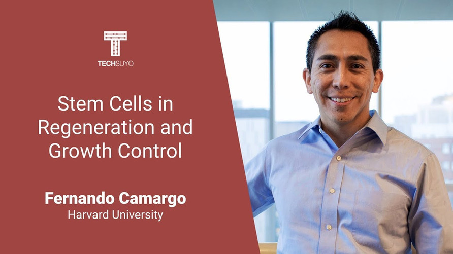 Stem Cells in Regeneration and Growth Control