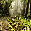 El-Yunque-Rainforest_3.jpg