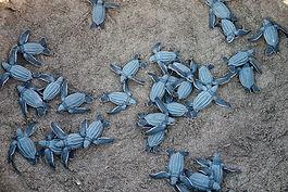 a-group-of-blue-sea-turtles-3661927.jpg