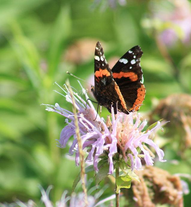 wild bergamontloda cemetary (35).JPG