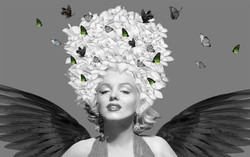 shopify  updated on the wings of love