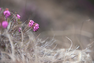 Bojan Rupnik Photography, fotografija narave: resje