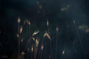 Bojan Rupnik Photography, fotografija narave: Kamenjak in tiho žitje