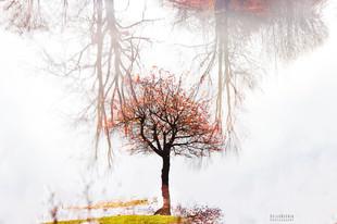 Bojan Rupnik Photography, pokrajinska fotografija: drevo in Planinsko polje
