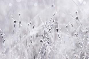 Bojan Rupnik Photography, črnobela fotografija: travnik