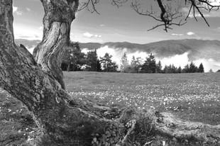 Bojan Rupnik Photography, črnobela fotografija: Slivnica