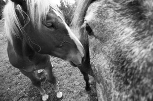 Bojan Rupnik Photography, fotografija psov in živali