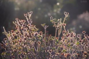 Bojan Rupnik Photography, fotografija narave: suho cvetje