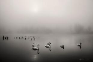 Labodja jutranja meditacija