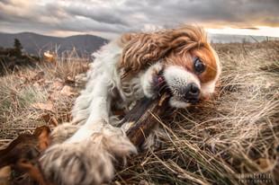 Bojan Rupnik Photography, fotografija psov in malih živali